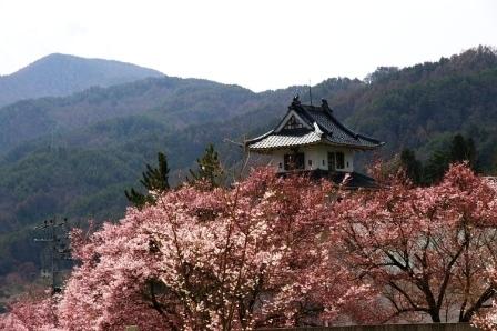0804高遠の桜1.JPG