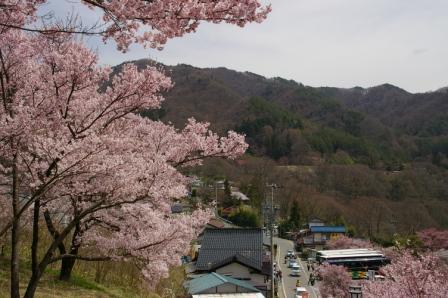 0804高遠の桜2.JPG