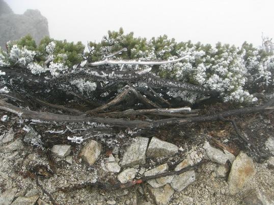 10161618唐松岳頂上直下.JPG