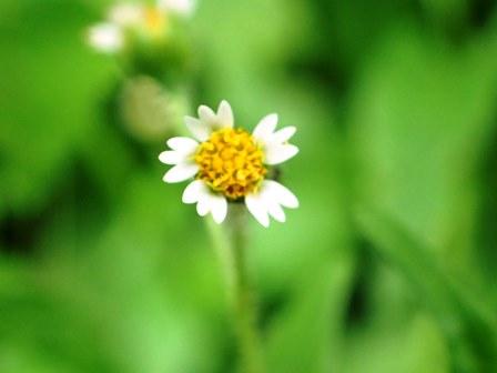 御岳山の花3.jpg